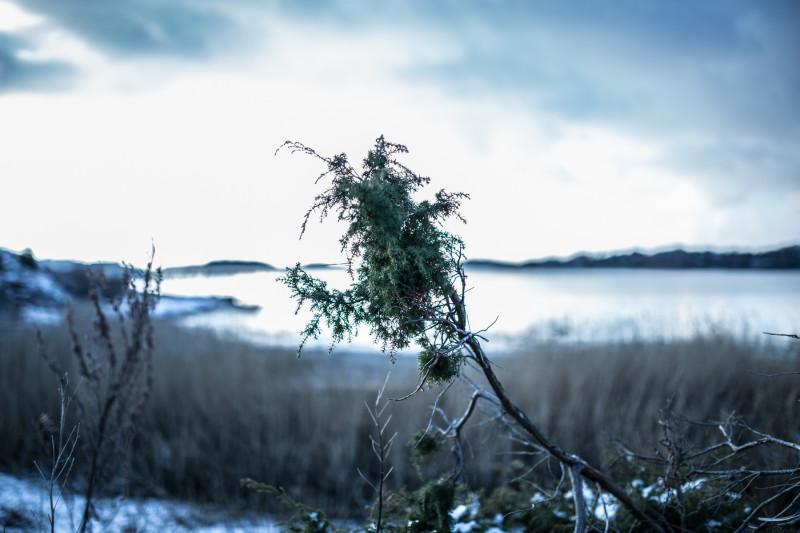 schweden_landschaft (15)